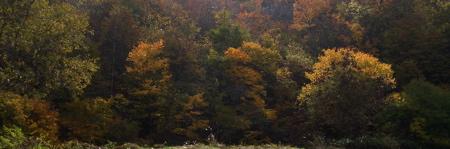20071101004.jpg