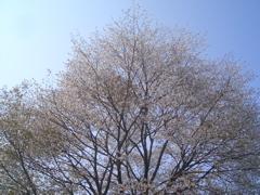 20080430005.jpg
