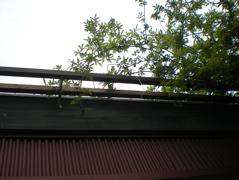 20100519001.jpg